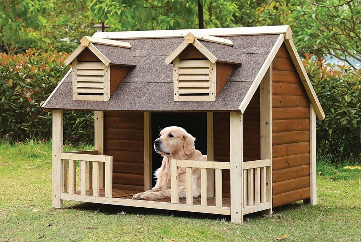 mua nhà cho chó